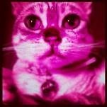 pinkfluffykitty